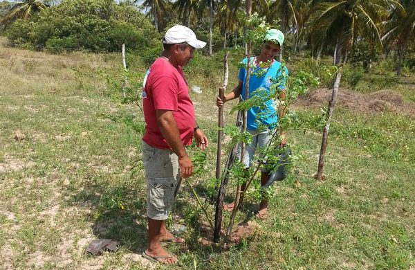 Auf der Nós na Vida Farm pflanzen wir alles selbst an.