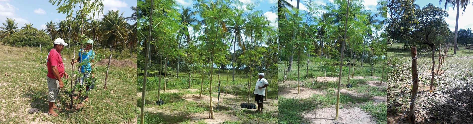 Blick auf das Farmland von Nós na Vida