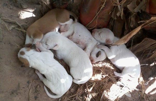 Auf der Nós na Vida Farm gibt es auch Tiere - hier ein Wurf kleiner Hundewelpen.