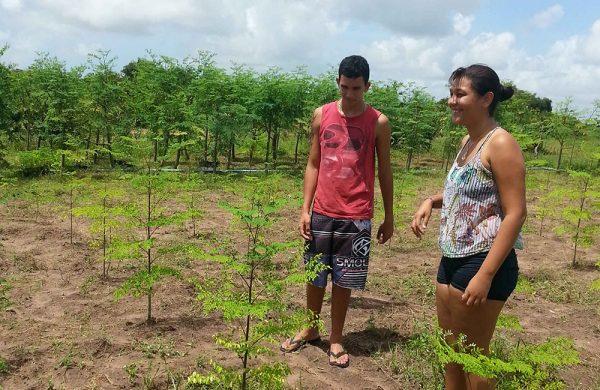 Es ist spannend zu sehen, wie aus den jungen, recht unscheinbaren Moringa-Pflänzchen große Bäume werden.