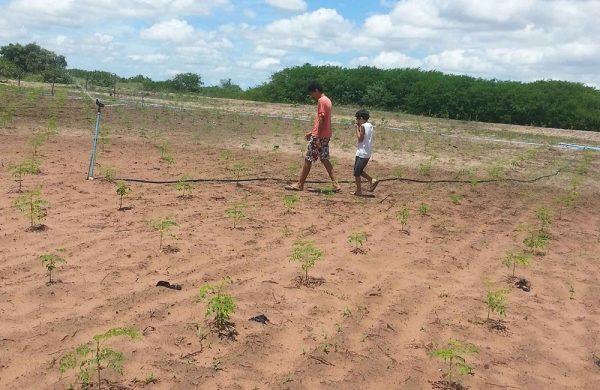 Die Moringa-Jungpflanzen brauchen Wasser, um zu gedeihen. Wir bewässern umweltbewusst.