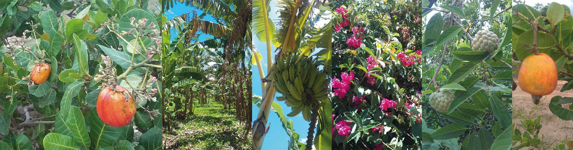 nosnavida-pflanzen-auf-der-farm